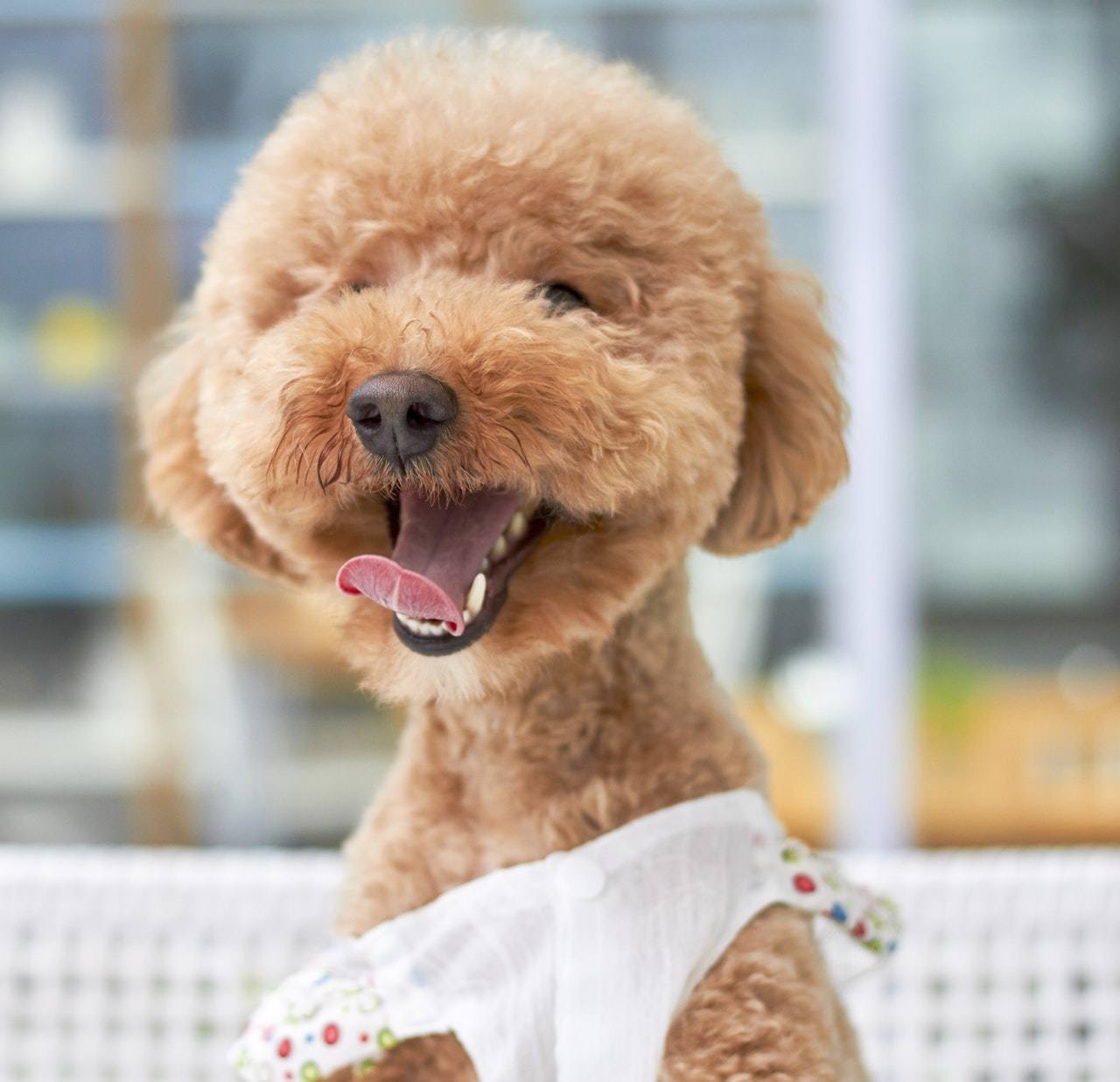 Dog Grooming Glen Rock New Jersey