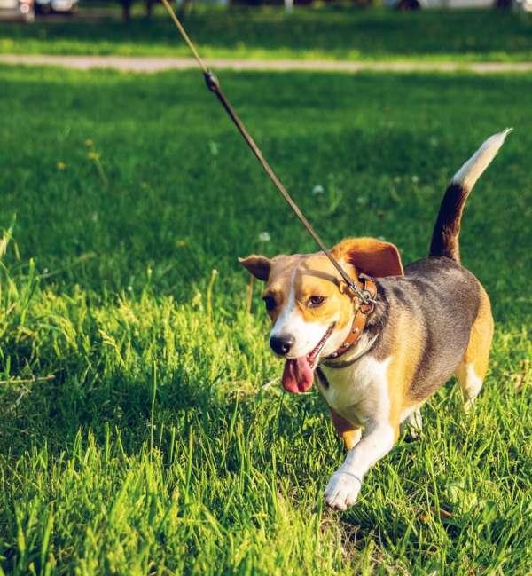 podiumio dog walks