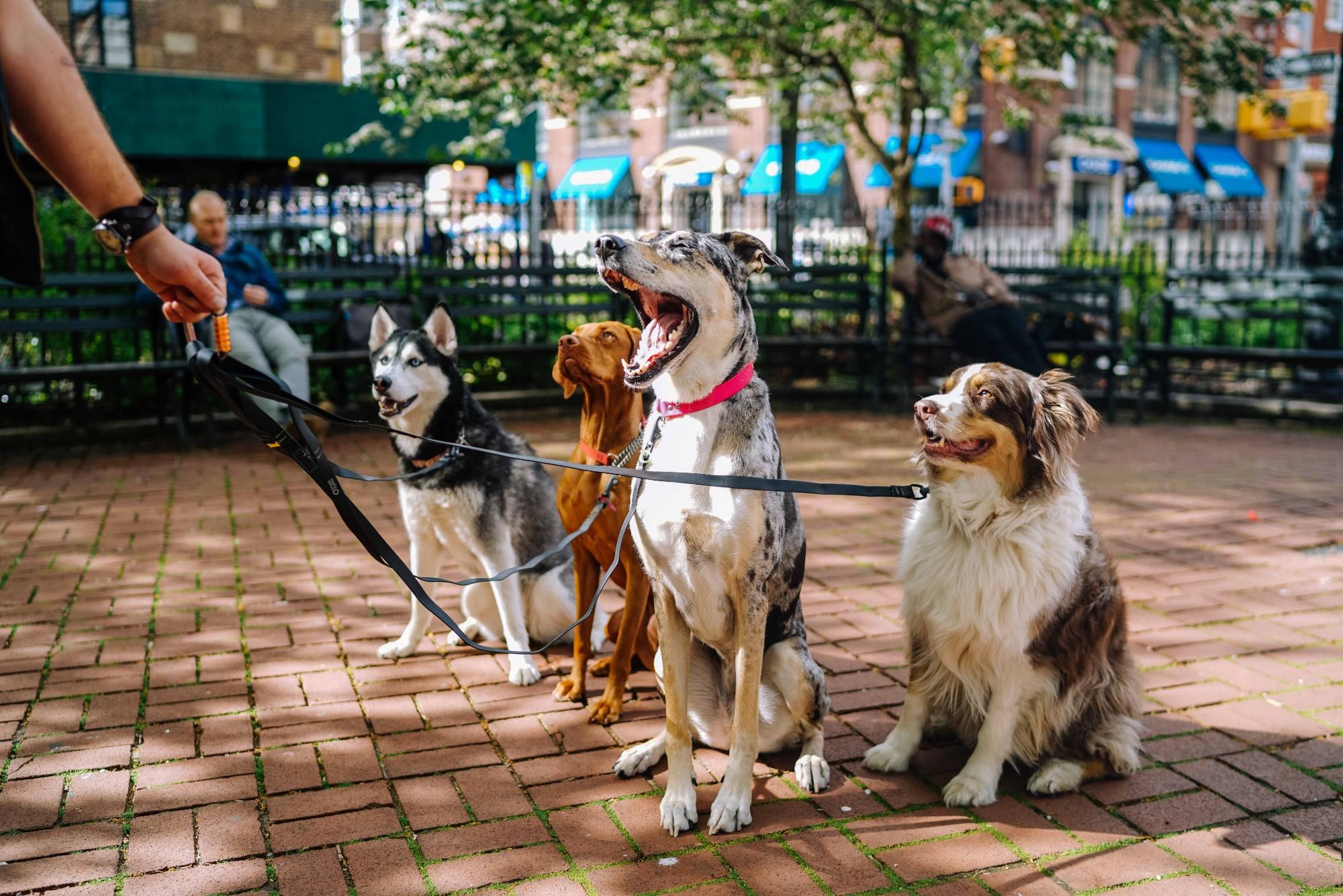 Dog Walker Banner